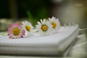 flors i llibreta